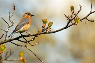 Beginning Birdwatching