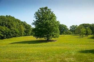 Treasured Trees of the Arboretum Tram Tour