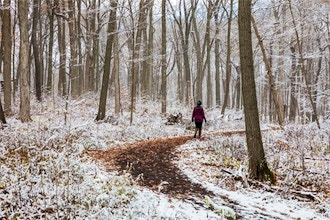 Forest Therapy Winter Walks