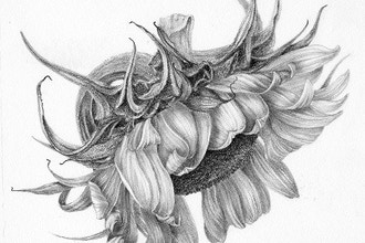 Nature in Graphite