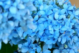 Gelatinas Florales