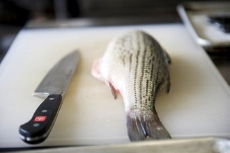 From Fin to Tail: Cooking the Entire Fish