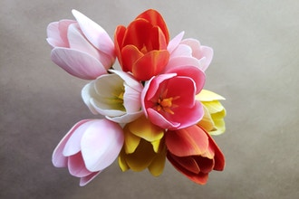 Tulip. Sugar flowers