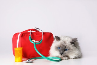 Pet (Dog & Cat) CPR + First Aid Certification