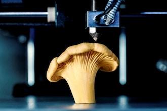 3D Modeling Food