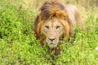 Preparing for an African Safari