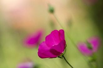 Creative Garden Photography - Exploring Light