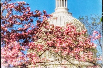 Smartphone Field Shoot - Springtime Around The Capitol