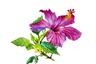 Virtual Floral Watercolor for Beginners