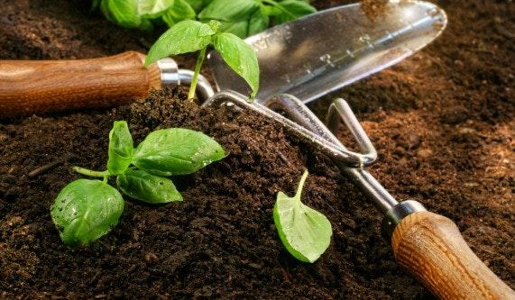 Basic Organic Gardening 101