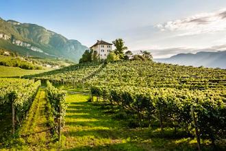 Go Alpine: Alto Adige - Südtirol Wines