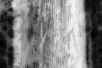 Lensless Imaging (Online)