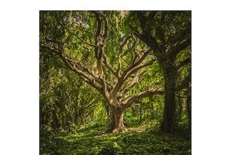 The Magic & Medicine of Trees