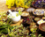Healing Spices: Herbal Medicine in Your Spice Rack