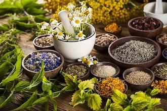 Healing & Preparing First-Aid Medicinal Plants