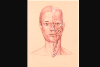 Anatomy and Structure of the Head for Portraiture