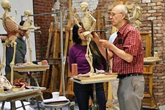 Human Anatomy: Constructing an Ecorché