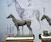 Noah's Ark: Animal Anatomy & Ecorché