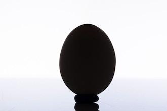 One Egg, One Light