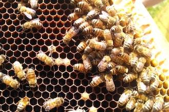 A - Bee - C's of Beekeeping