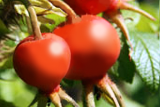 Sup on Shrubs – Fall Edible Wild Plants course