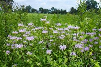Edible Wild Plants Walk Flowers