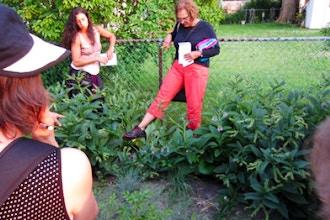 Suburban Permaculture Garden Walk