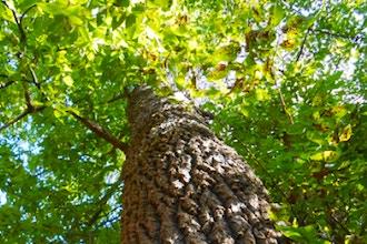 Intro to Plant ID – Trees