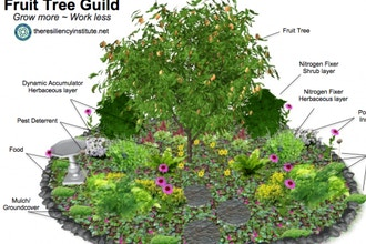 Let's Grow a Fruit Tree Guild