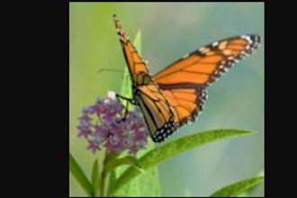 Botanical Art: Butterflies and Blooms