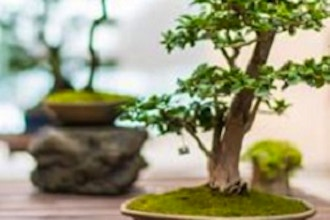 Bonsai Show Preparation Workshop