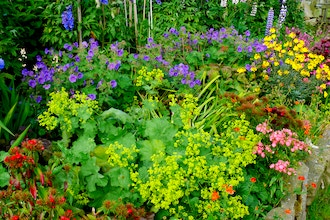 Cottage Garden Designs for the Midwest
