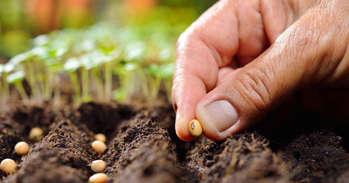 Seed Sowing For Fall Edibles Horticulture Classes Chicago