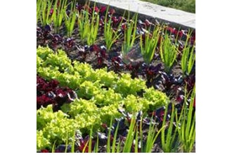 Edible Landscape Design and Gardening
