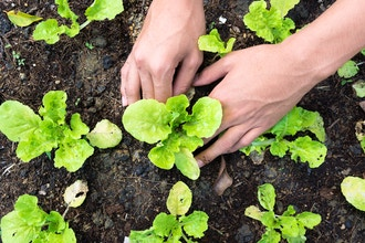How to Keep Your Garden Thriving