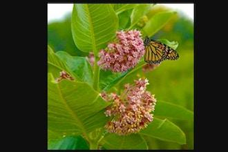 Pollinator Plant Relationships: Online