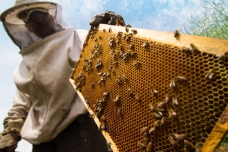 Reading Your Beehive