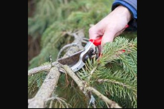 Evergreen Pruning