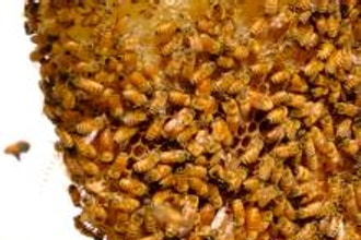 Advanced Beekeeping Concepts