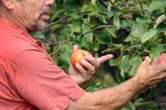 Growing Heirloom Apples