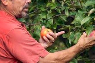 Growing Heirloom Apples