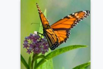 Butterflies of Illinois