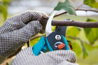 Basic Pruning for Homeowners