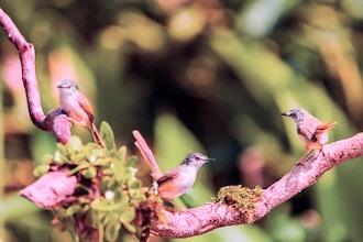 Bird Walk: Fall Migration