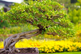 Deciduous Bonsai Tree Workshop