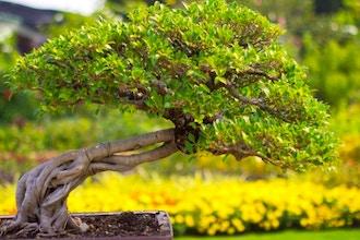 Deciduous Bonsai Tree Workshop