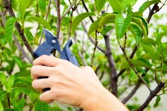 End-of-Season Pruning Workshop
