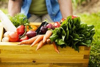 The Organic Vegetable Garden in Summer
