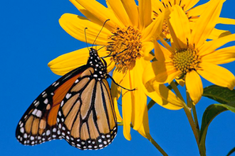 Photographing Butterflies and Blooms