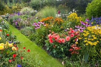 Herbaceous Perennials